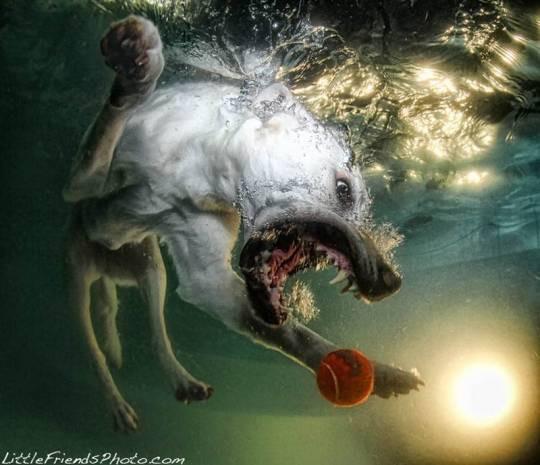 Köpeklerin su altındaki dalışlarından ilginç kareler! -GALERİ - Page 4