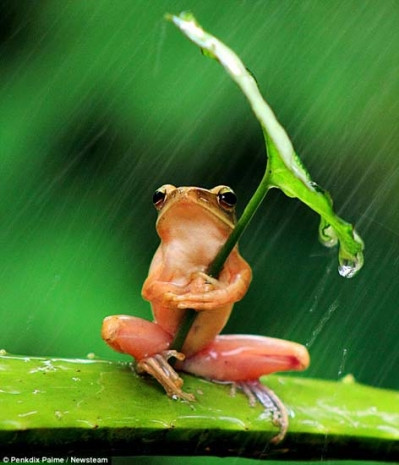 Kurbağaların zekası şaşırttı! - Page 1