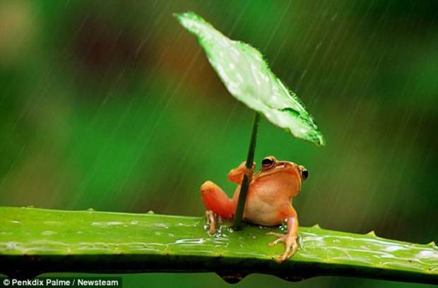 Kurbağaların zekası şaşırttı! - Page 2