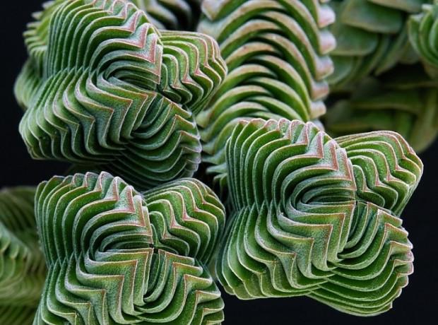 Kusursuz geometrik şekillere sahip, bakmaya doyamayacağınız güzellikte 27 bitki - Page 1