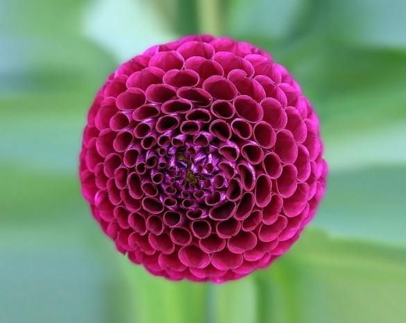 Kusursuz geometrik şekillere sahip, bakmaya doyamayacağınız güzellikte 27 bitki - Page 2