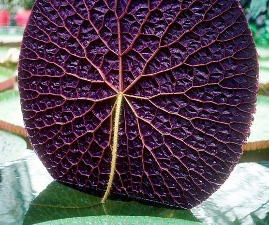 Kusursuz geometrik şekillere sahip, bakmaya doyamayacağınız güzellikte 27 bitki - Page 3