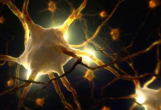 Laboratuvarda insan beyni üretildi - Page 1