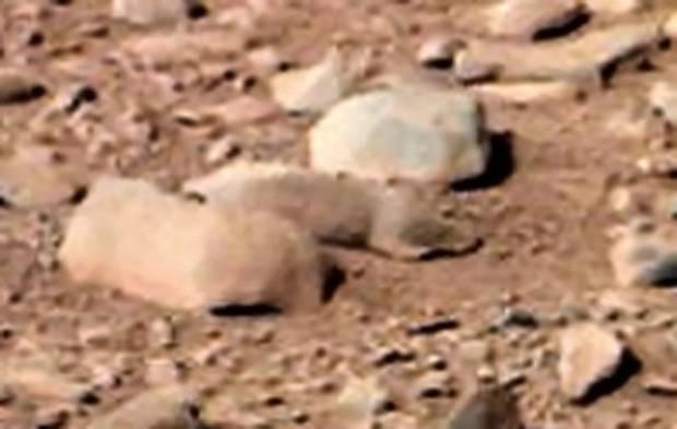 Mars'ta Kertenkele mi görüldü? - Page 2