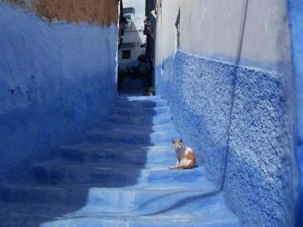 Mavi şehrin 'Akrep sırrı!' - Page 3