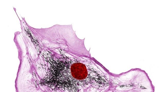 Mikro organizma boyutunda fotoğraflar - Page 1