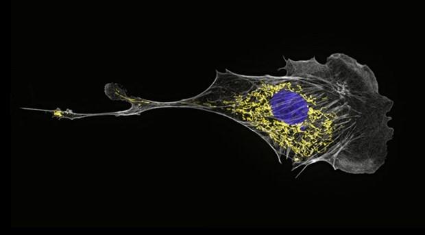 Mikro organizma boyutunda fotoğraflar - Page 2