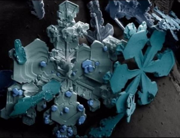 Mikroskop ile çekilmiş enteresan fotoğraflar - Page 1