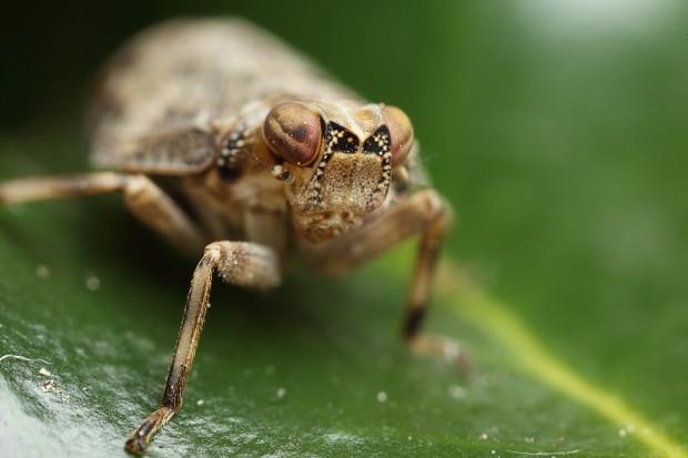 Mühendisler bu böceği örnek aldı! - Page 3