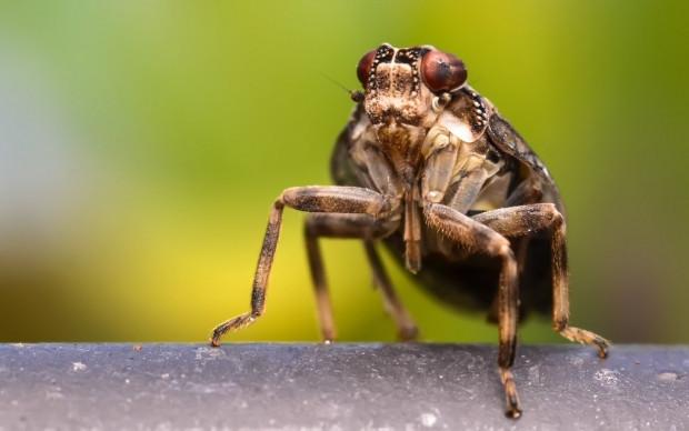 Mühendisler bu böceği örnek aldı! - Page 4