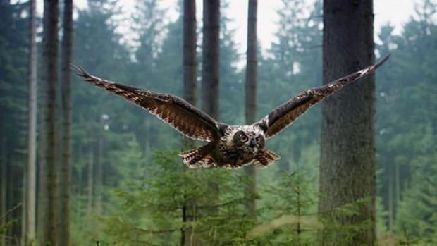 Muhteşem doğa fotoğrafları masa üstünüze gelsin - Page 2