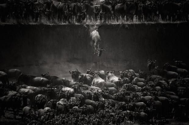 National Geographic 2014 fotoğraf yarışması kazananları - Page 2