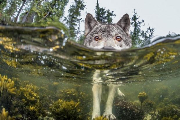 National Geographic Dergisi Tarafından Çekilmiş 2015 Yılının En İyi 20 Fotoğrafı - Page 2