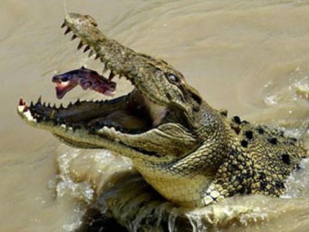 National Geographic katil hayvanları sıraladı - Page 1