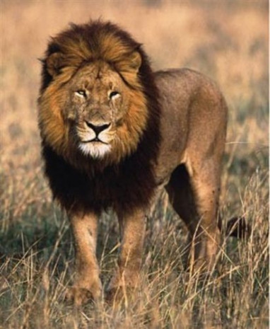 National Geographic katil hayvanları sıraladı - Page 2