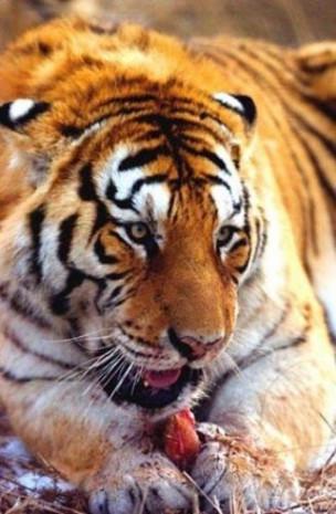 National Geographic katil hayvanları sıraladı - Page 3