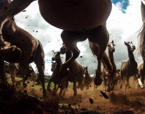 National Geographic yarışmasından finalistler - Page 2