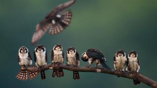 National Geographic yılın doğa fotoğrafçılarını belirliyor - Page 1