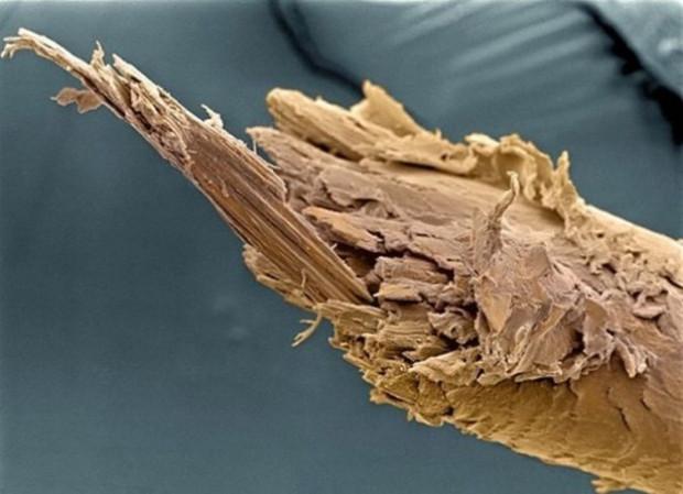Nesnelere  bir de elektron mikroskobu ile bakın! - Page 3