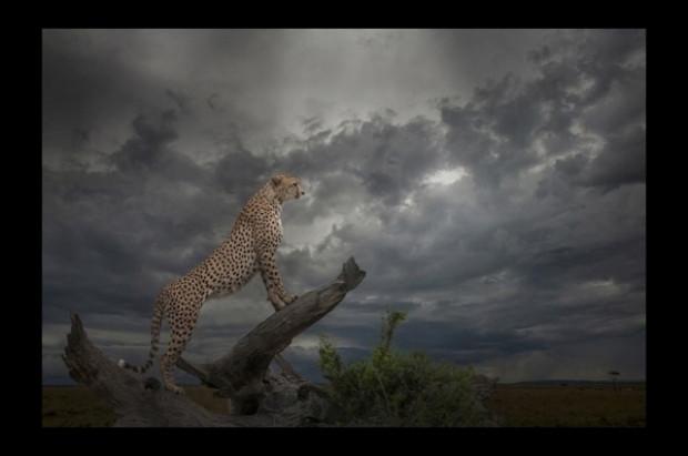 Ödüllü doğa fotoğrafları - Page 2