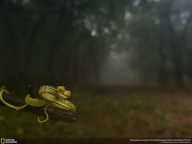 Ödüllü National Geographic fotoğrafları - Page 2
