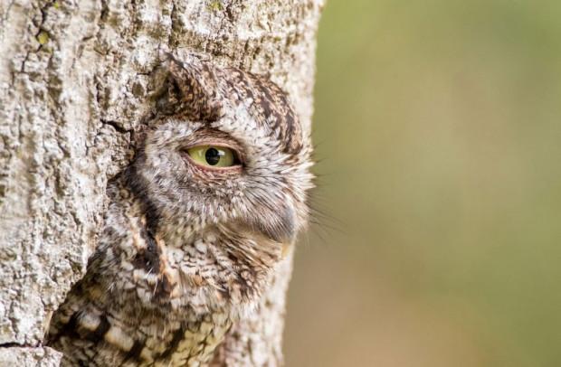 Ödüllü vahşi doğa fotoğrafları - Page 1