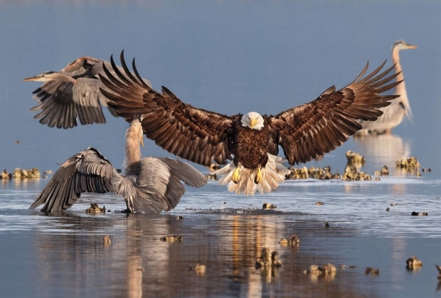 Ödüllü vahşi doğa fotoğrafları - Page 4