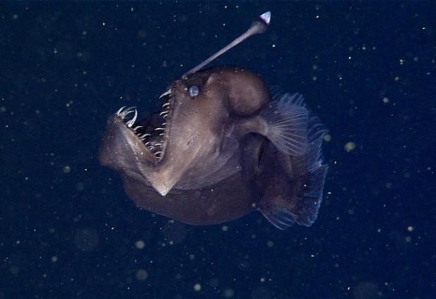 Okyanuslarda yaşayan garip yaratıklar - Page 4