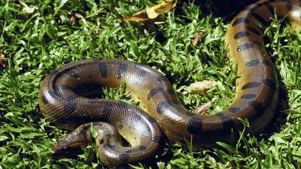 Ölümcül yılanlar - Page 4