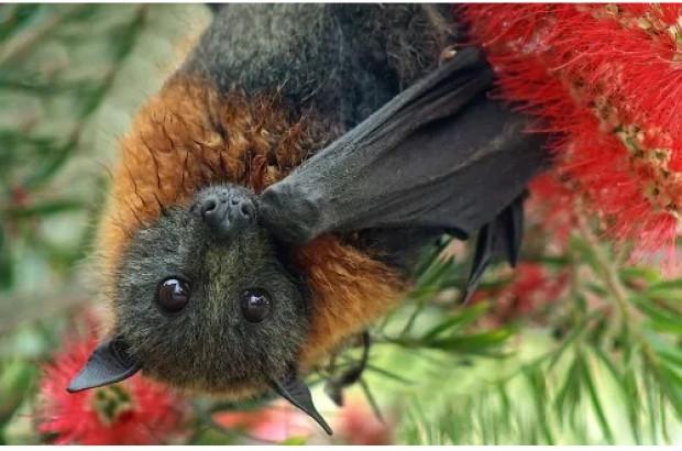Ömrünüzde görmediğiniz 11 şaşırtıcı hayvan türü-1 - Page 1