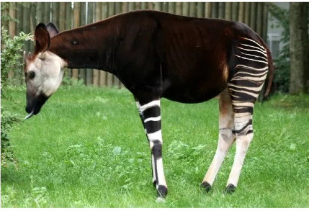 Ömrünüzde görmediğiniz 11 şaşırtıcı hayvan türü-1 - Page 4