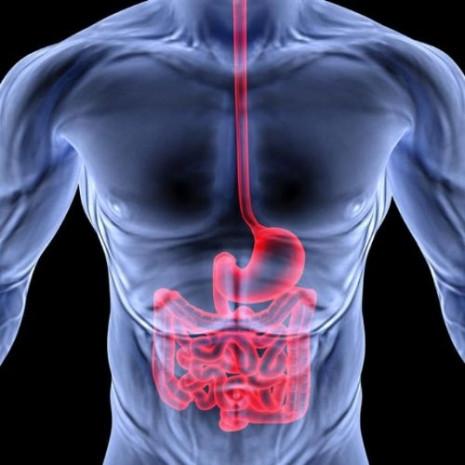 Organlarımızın yenilenme süreleri - Page 1
