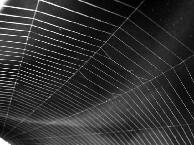 Örümcek ağındaki inanılmaz sır! - Page 3