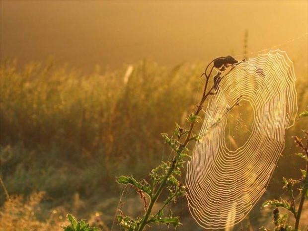Örümcek ağındaki inanılmaz sır! - Page 4