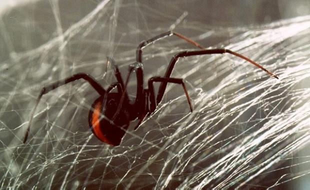Örümcek ağının özellikleri şok etti! - Page 3