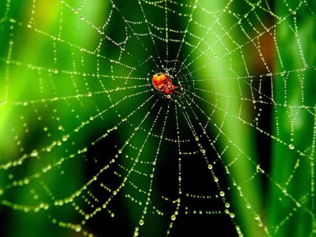 Örümcek ağlarını tarayan yapay zeka! - Page 1