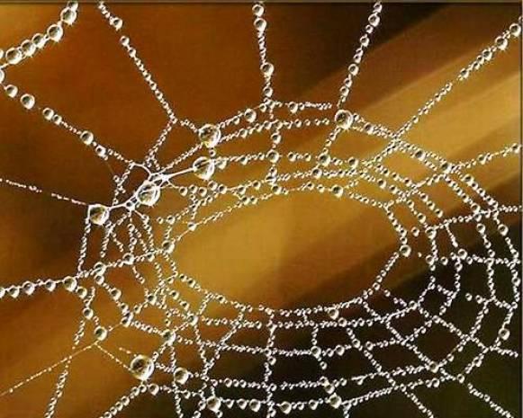 Örümcek ağlarını tarayan yapay zeka! - Page 3