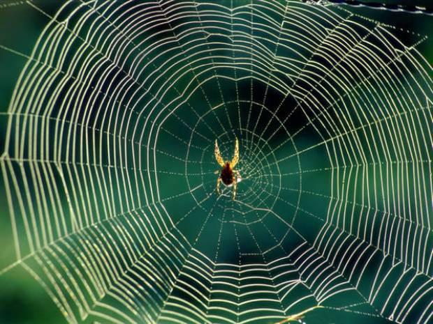 Örümcek ağlarını tarayan yapay zeka! - Page 4