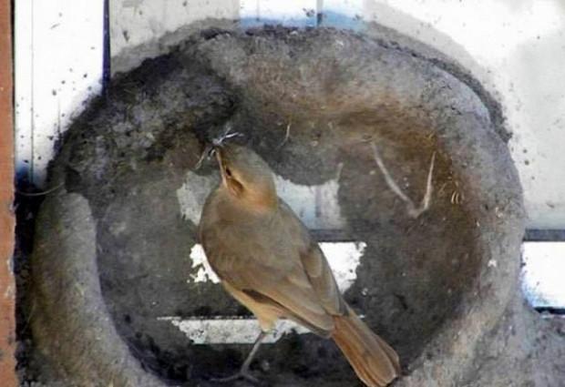 Peki kuşlar nasıl yuva yapar hiç merak ettiniz mi? - Page 4