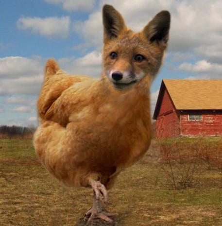 Photoshop hayvanlar alemini rezil etti - Page 3