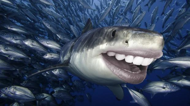 Photoshop mağduru köpek balıkları - Page 2