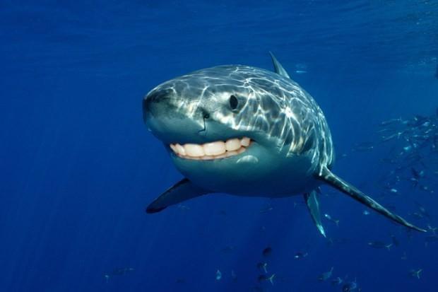 Photoshop mağduru köpek balıkları - Page 3