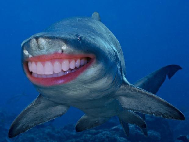 Photoshop mağduru köpek balıkları - Page 4