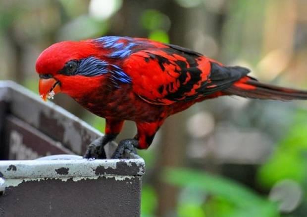 Rengarenk ihtişamlı kuşlar - Page 1