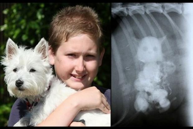 Röntgenle ortaya çıkan akıl almaz görüntüler! - Page 2
