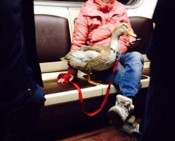 Sadece Moskova metrosunda çekilebilecek 30 fotoğraf! - Page 2