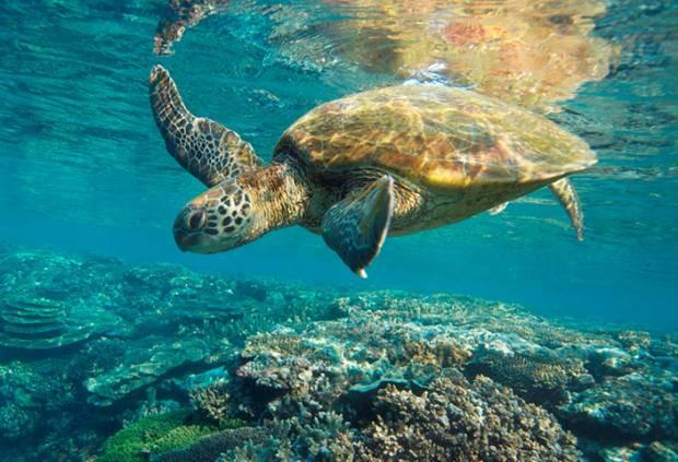 Barrier Reef sualtı manzaraları - Page 4