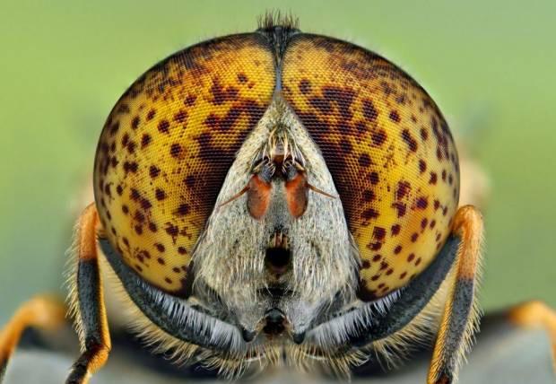 Sinek ve arılardaki inanılmaz detayları gördünüz mü? - Page 2