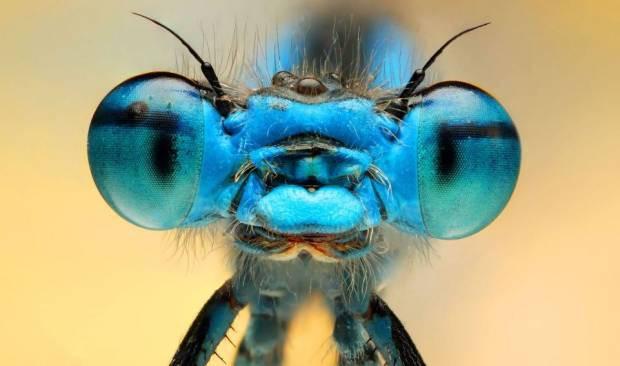 Sinek ve arılardaki inanılmaz detayları gördünüz mü? - Page 4