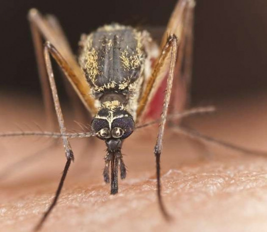 Sivrisinekler neden sizi seçiyor - Page 4